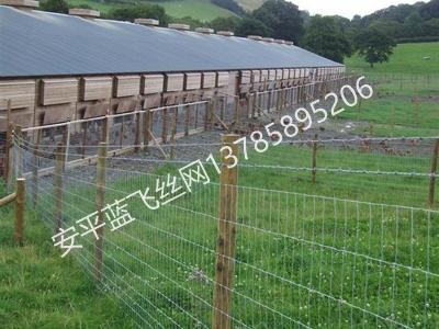 牧场护栏网-1.jpg