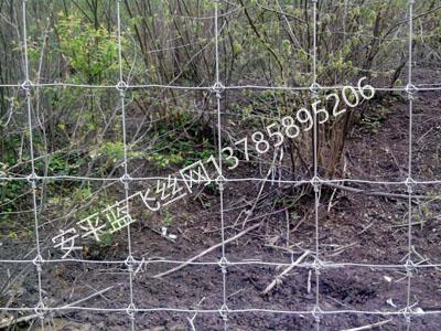 牧场护栏网-2.jpg